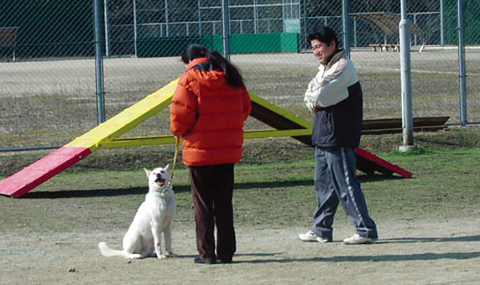 マザー,ルーフ,福岡,保護,訓練,学校,サニー,犬