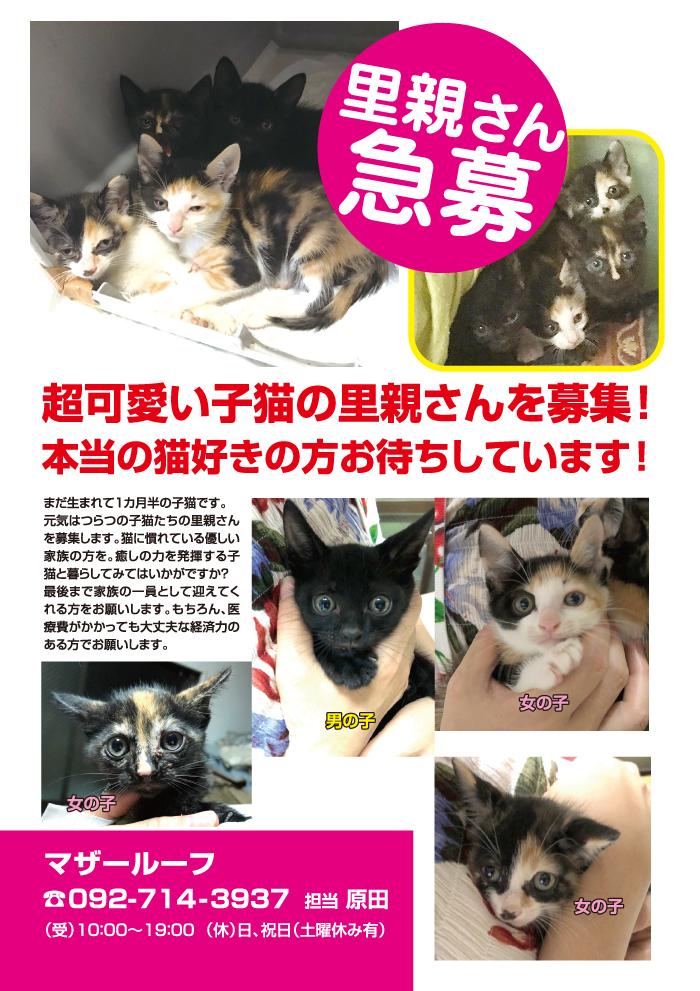 里親,募集,マザー,ルーフ,保護猫,赤ちゃん猫,スキップ