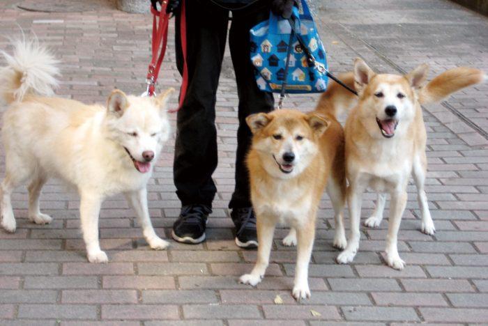 福岡,マザー,ルーフ,寄付,保護犬,保護猫,医療費