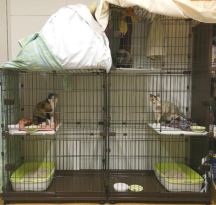 マザー,ルーフ,福岡,保護猫,保護犬,ゲージ,寄付