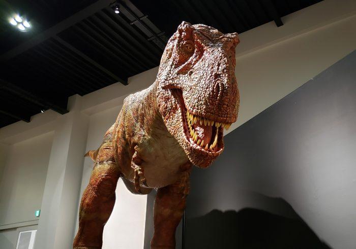 恐竜,御船町,,博物館,ミフネリュウ,トルヴォサウルス,プレゼント,招待券