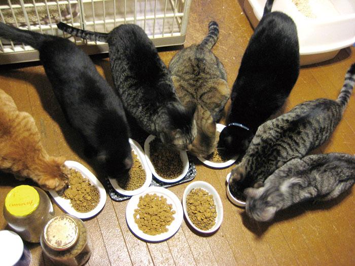 コラム,保護猫,保護犬,マザー,ルーフ,黒猫,脱走,怪我,不注意