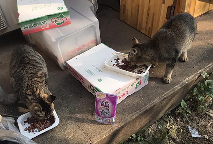 マザー,ルーフ,福岡,外猫,贅沢,美味しい,ご飯,フード,保護猫,猫