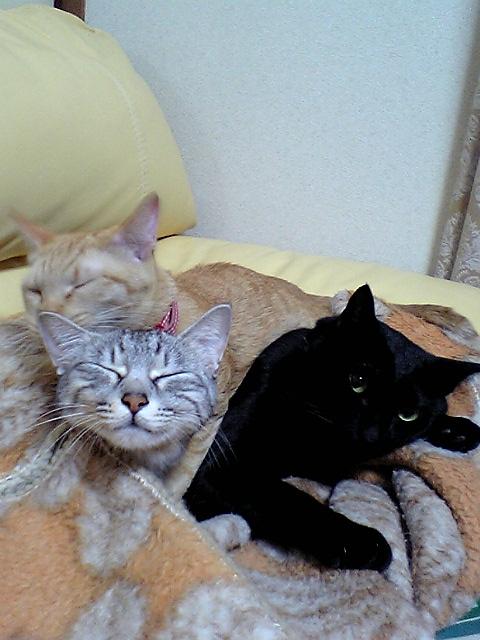 猫3匹,ジューク,ミルク,19歳,茶トラ,チャト,癒される,仲良し