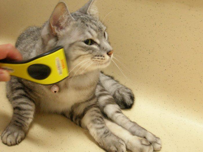 ジューク,グルーミング,19歳,美人猫,下半身不随,痩せた,長生き,床ずれ