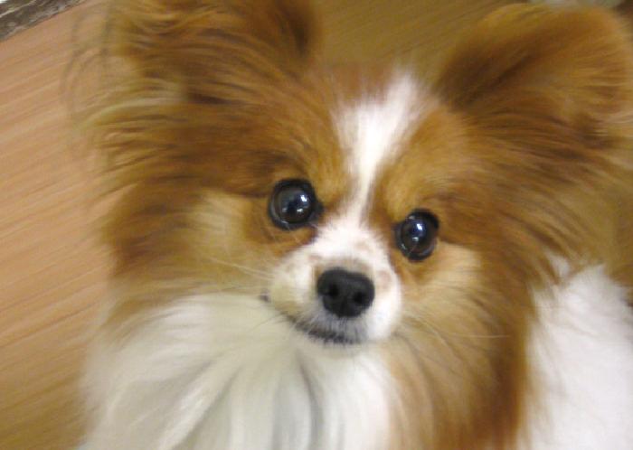 コラム,マザー,ルーフ,福岡,保護犬,保護猫,クセ,いたずら,習性