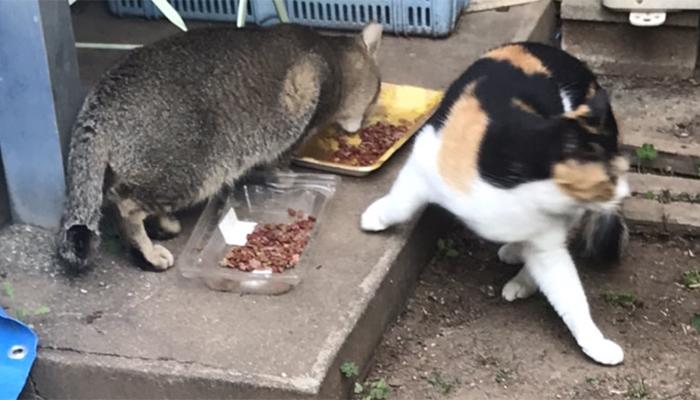マザー,ルーフ,福岡,地域猫,ご飯,ボス猫,外猫,保護猫,仲良し