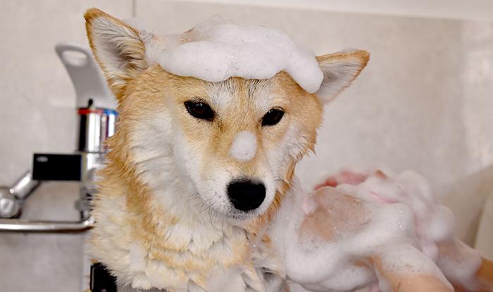 コラム,毛穴,シャンプー,皮脂,汚れ,犬,猫