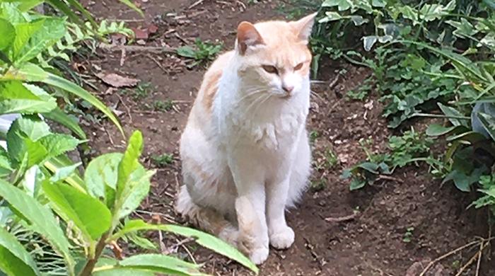 マザー,ルーフ,福岡,地域猫,外猫,トイレ,プランター,ボランティア,保護猫