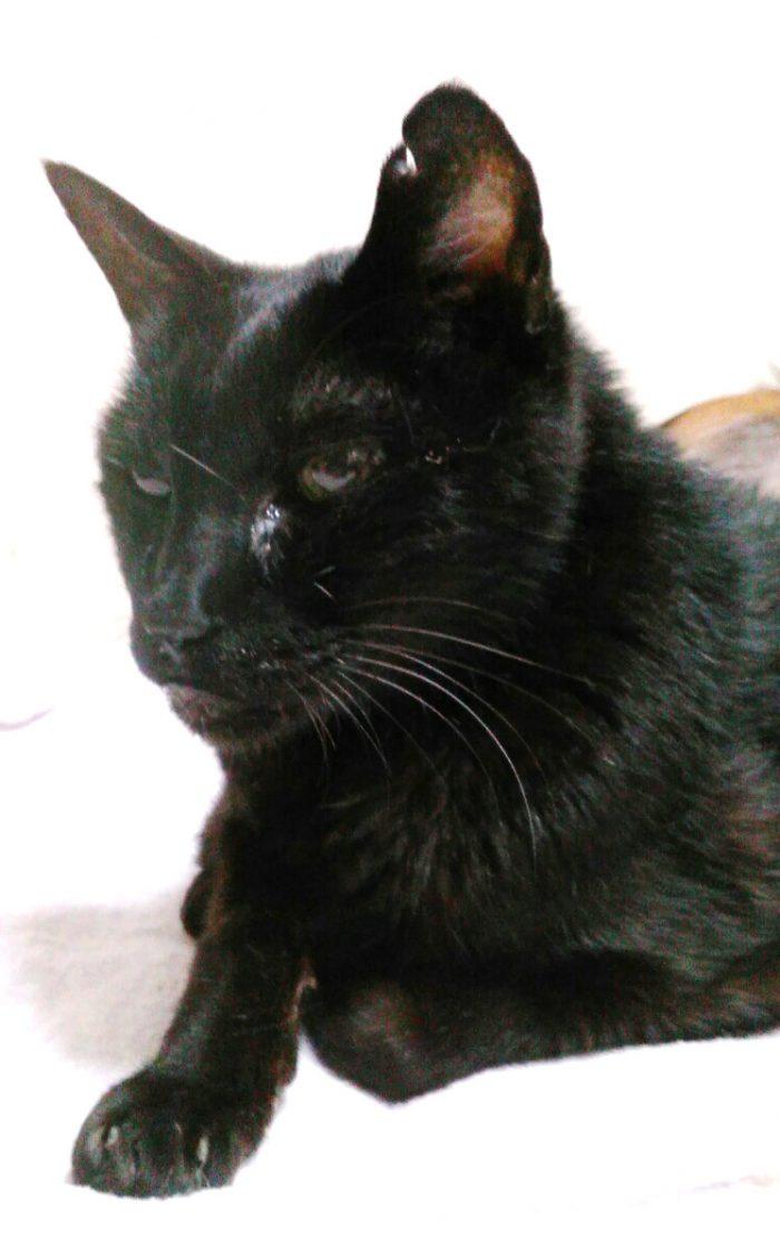 ミルク,黒猫,19歳,ハンサム猫,オス猫,膀胱炎