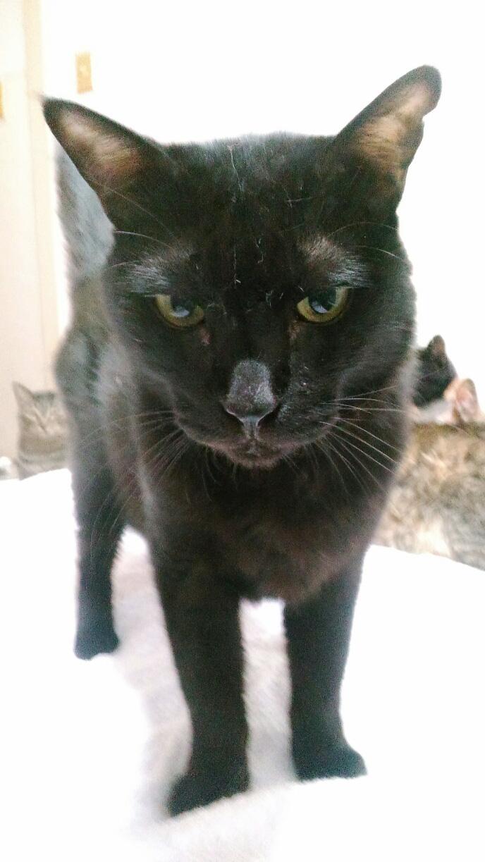 サンボ,11歳,オス猫,鼻水,嘔吐,黒猫