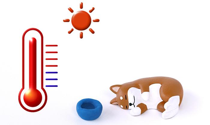 コラム ,マザー,ルーフ,熱中症,保護犬,暑さ,対策,体感,温度,福岡