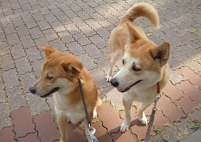 コラム ,マザー,ルーフ,楽しい,幸せ,保護犬,保護猫,福岡,犬友