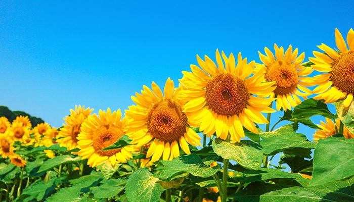 ヘルスケア,食品,夏,元気,美容,達人,疲労回復,タンパク質,鉄分
