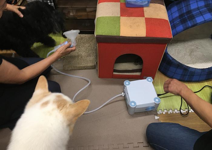 マザー,ルーフ,福岡,保護犬,保護猫,吸入器,吸入