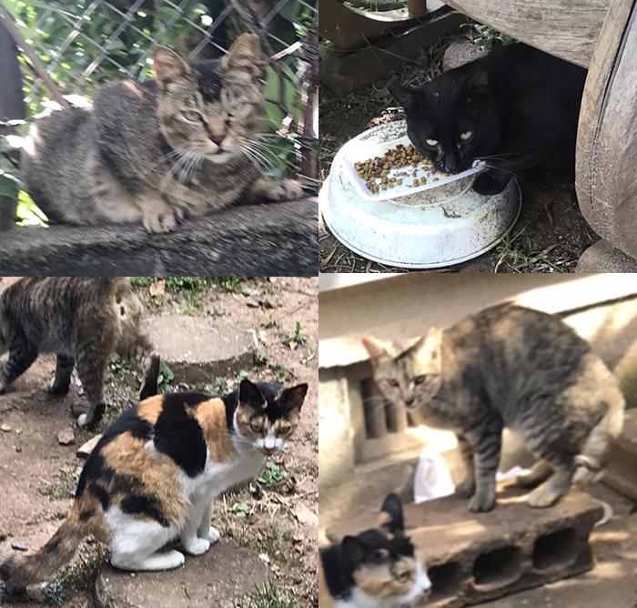マザー,ルーフ,福岡,梅雨,病気,保護犬,高齢犬,保護猫,外猫