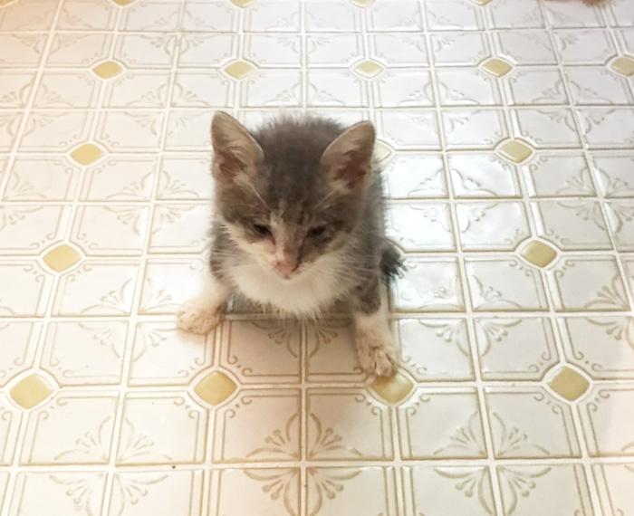 保護猫,福ちゃん,小さな身体,猫風邪,生命力,助けたい命,回復をめざす