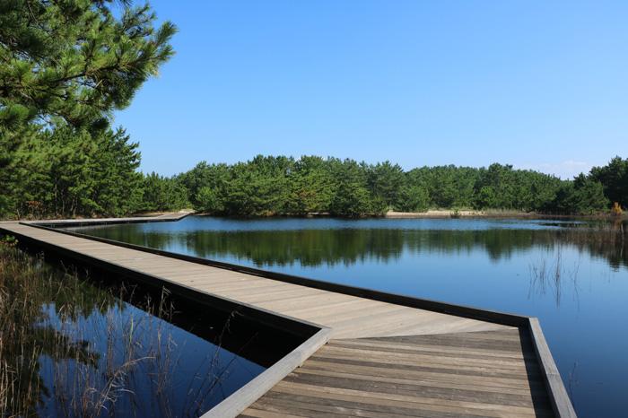 海の中道,森の池,8月,突然,出現,幻の池,50 ha,
