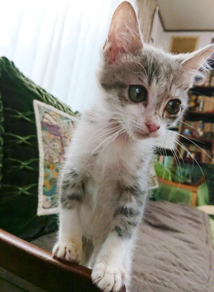 福ちゃん,保護猫,猫風邪,生後3か月,大きな目,男の子,ちび猫