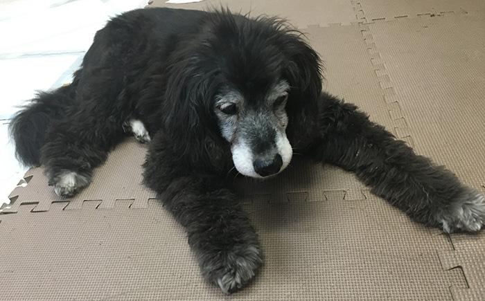 マザー,ルーフ,福岡,保護犬,保護猫,ご寄付,動物保護施設,シニア犬,病気,拒食
