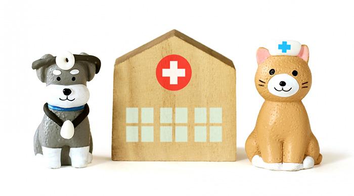 マザー,ルーフ,福岡,保護犬,保護猫,病気,癌,手術,看病,ご飯,膵臓,黄疸