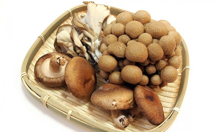 食材,旬,秋の味覚,健康,栄養,きのこ,栗,りんご,いちじく