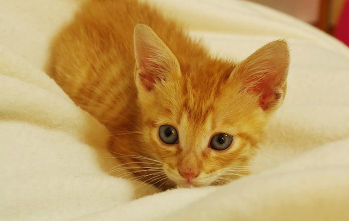コラム,免疫力,セラピー,動物,幸せ,子猫,飼育,笑顔