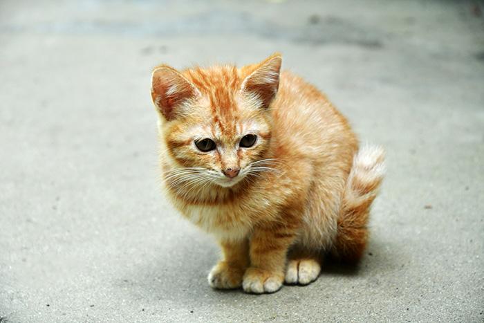 マザー,ルーフ,福岡,ご寄付,保護犬,保護猫,動物,里親,子猫,仔猫,赤ちゃん猫