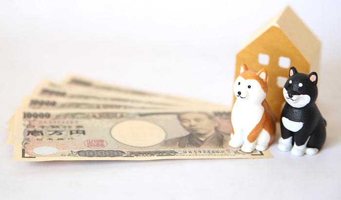 マザー,ルーフ,福岡,保護犬,保護犬,募金,ご寄付,高額,医療費,必要,お願い