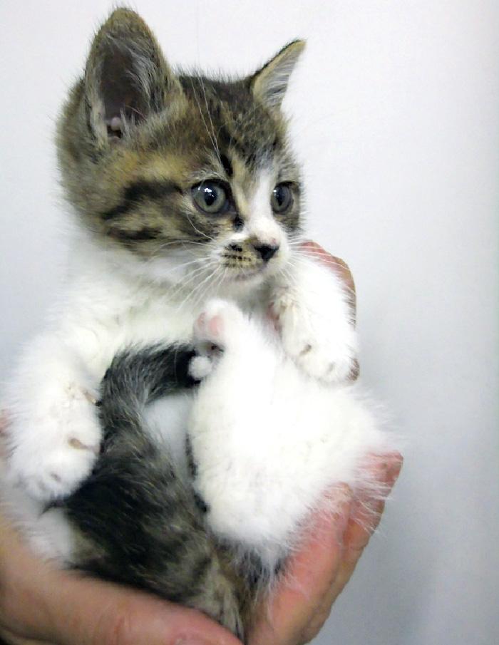 マザー,ルーフ,里親,子猫,赤ちゃん,保護,幸せ,かわいい,授乳,お世話,大変