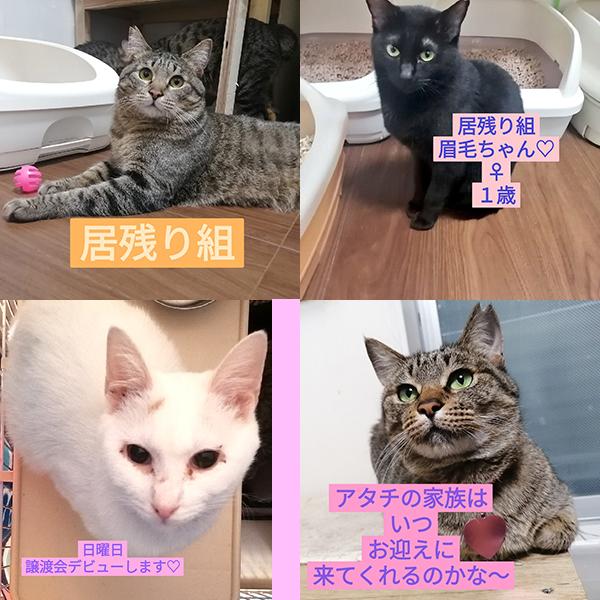 譲渡会,さわら,メモリアル,パーク,保護猫,マザー,ルーフ,福岡