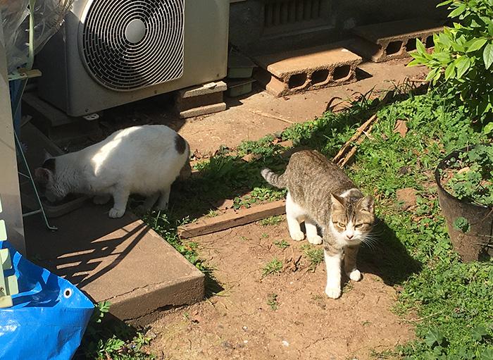 マザー,ルーフ,福岡,外猫,地域猫,三毛猫,保護猫,動物保護