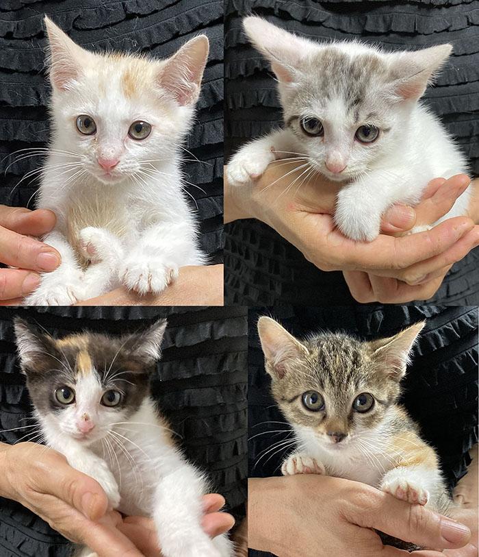 マザー,ルーフ,福岡,保護猫,子猫,里親,募集,赤ちゃん猫,動物,保護
