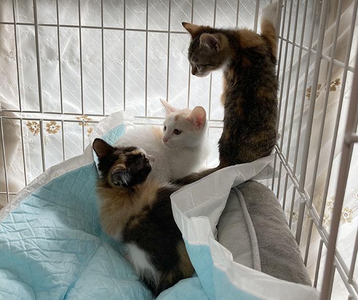 マザー,ルーフ,地域猫,捕獲,赤ちゃん猫,三毛猫,避妊,去勢,里親,動物,保護
