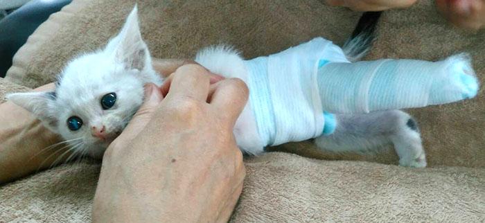 マザー,ルーフ,福岡,赤ちゃん猫,骨折,点滴,膿,菌,保護猫