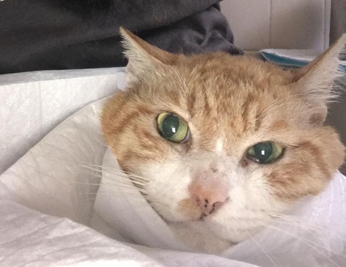 マザー,ルーフ,福岡,外猫,地域猫,保護猫,動物保護,腎臓,療法食