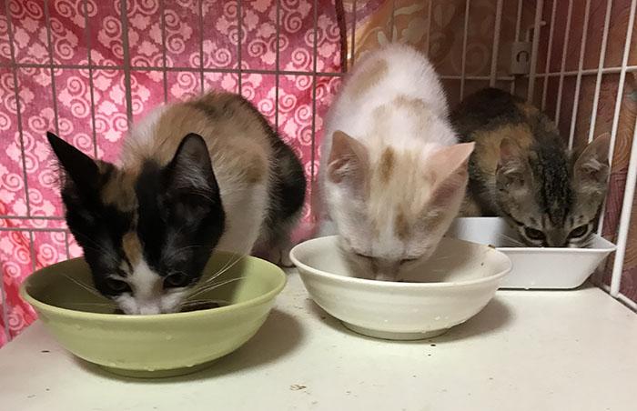 マザールーフ,保護猫,ちび猫,見守り,赤ちゃん猫,里親,募集,福岡