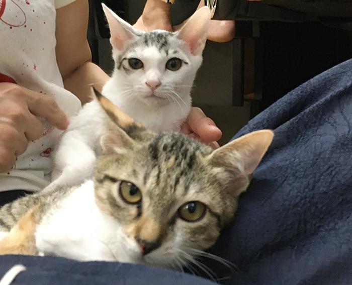 マザー,ルーフ,保護猫,ちび猫,赤ちゃん猫,里親,募集,福岡,家族