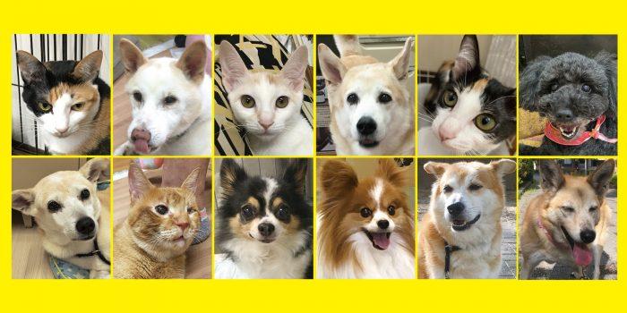 あに,ファン,マザー,ルーフ,クラウド,ファンディング,寄付,治療費,犬,猫,支援