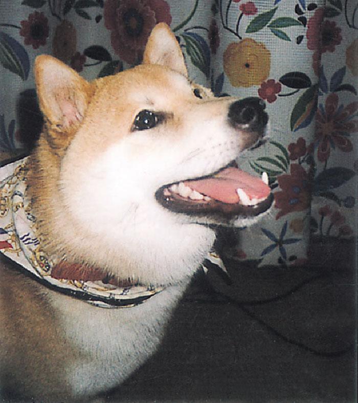 マザー,ルーフ,福岡,保護犬,公園,ミックス犬,家族,幸福