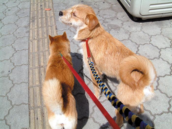 エッセイ,編集長,徒然,犬,保護,迷い犬,わんにゃんよかネット,ノーリード