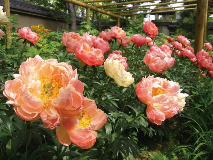 お出かけ,イベント,バラ,つつじ,福岡,花,まつり