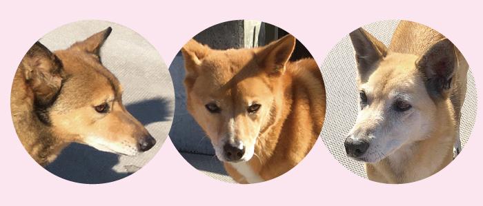 マザー,ルーフ,保護犬,野犬,恐怖,育てる,福岡
