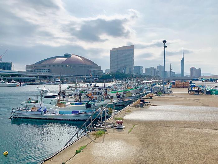 不動,たける,たけちゃんねる,伊崎漁港,おさかな夕市,福岡,福岡ガイド
