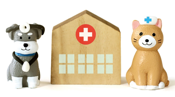 マザー,ルーフ,福岡,貧血,保護犬,腎臓,輸血