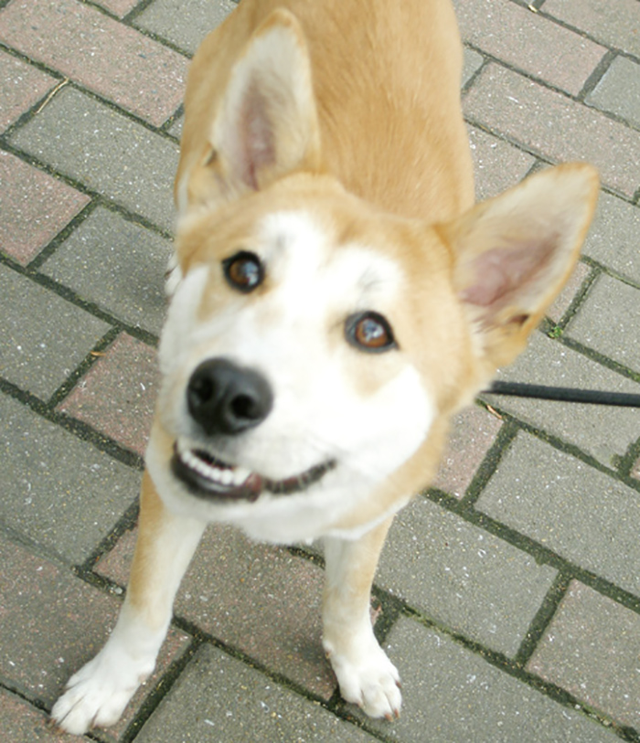 マザー,ルーフ,福岡,保護犬,公園,ミックス犬,問題行動,高齢犬,小型犬