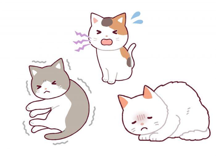 マザー,ルーフ,福岡,保護猫,嘔吐,里親,募集