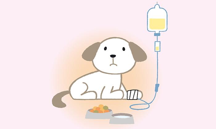 スキップ,犬,猫,介護,高齢
