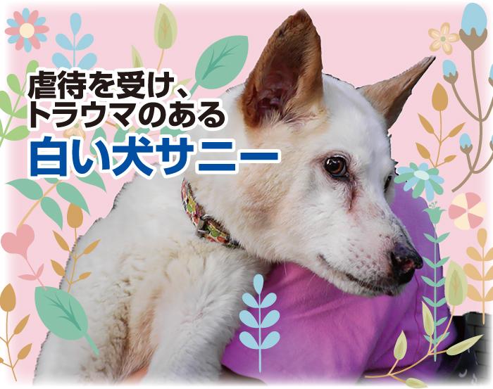 マザー,ルーフ,保護,犬,福岡,サニー,問題行動