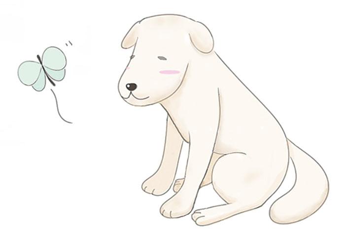 高齢犬,関節炎,コンドロイチン,サプリ,マザー,ルーフ,福岡